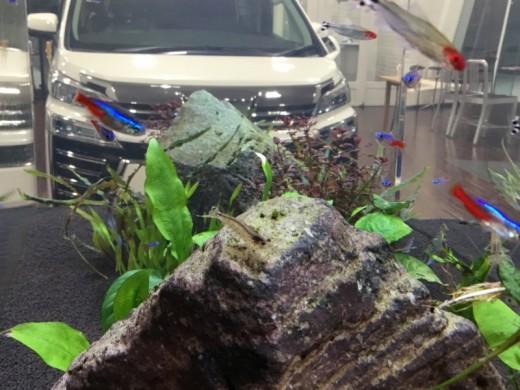 熱帯魚水槽8